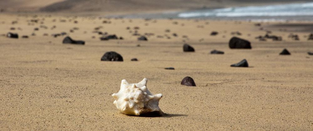 Mušle na pláži, kde se mísí vulkanický písek se saharským
